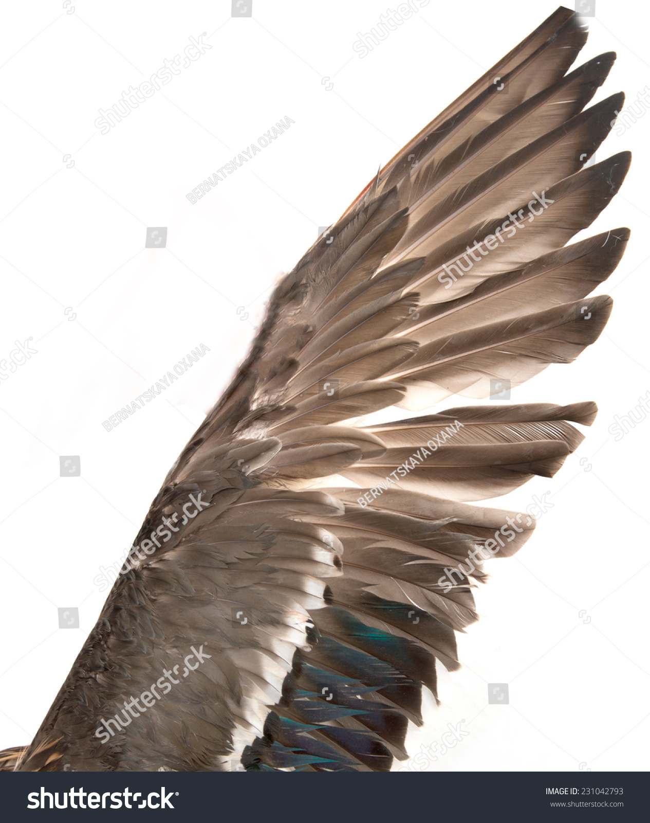 Duck Wings On White Background Stock Photo (Royalty Free) 231042793 ...