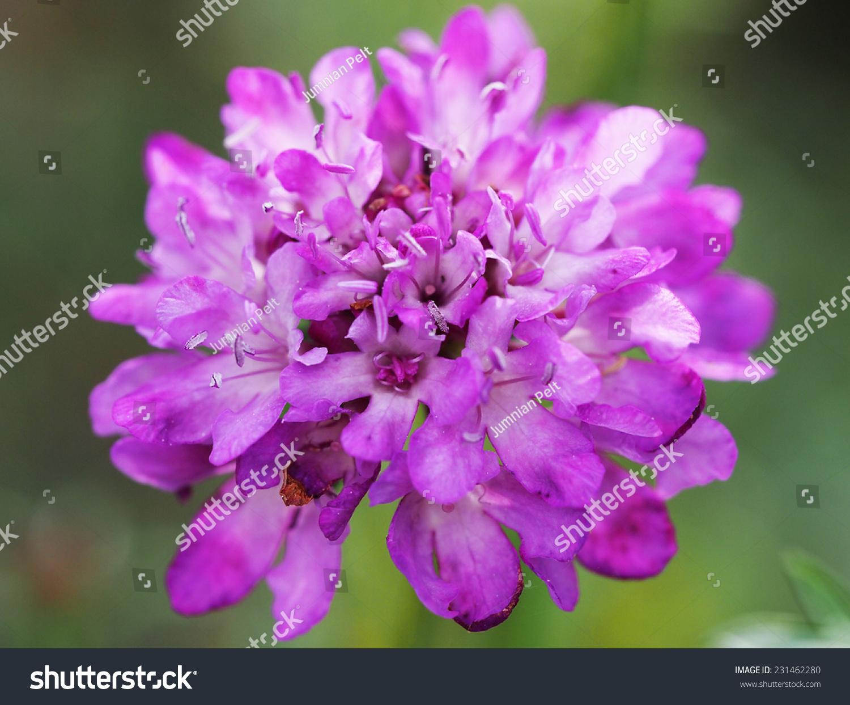 Autumn Beautiful Pink Flowers Nature Stock Photo Edit Now