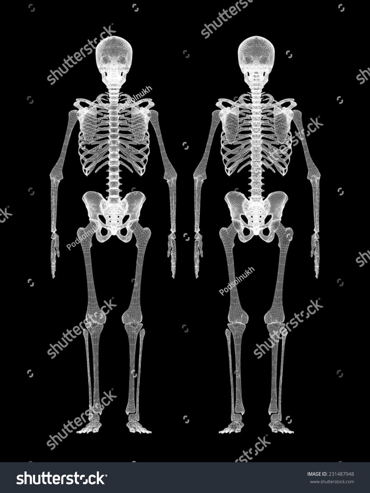 Human Body Skeleton Body Structure Wire Stock Illustration 231487948