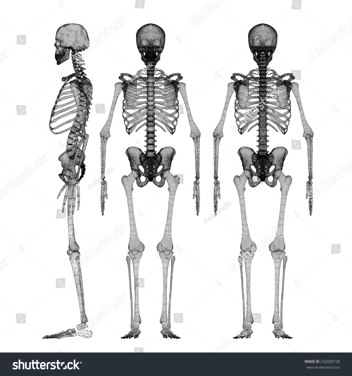 Human Body Skeleton Body Structure Wire Stock Illustration 232000738