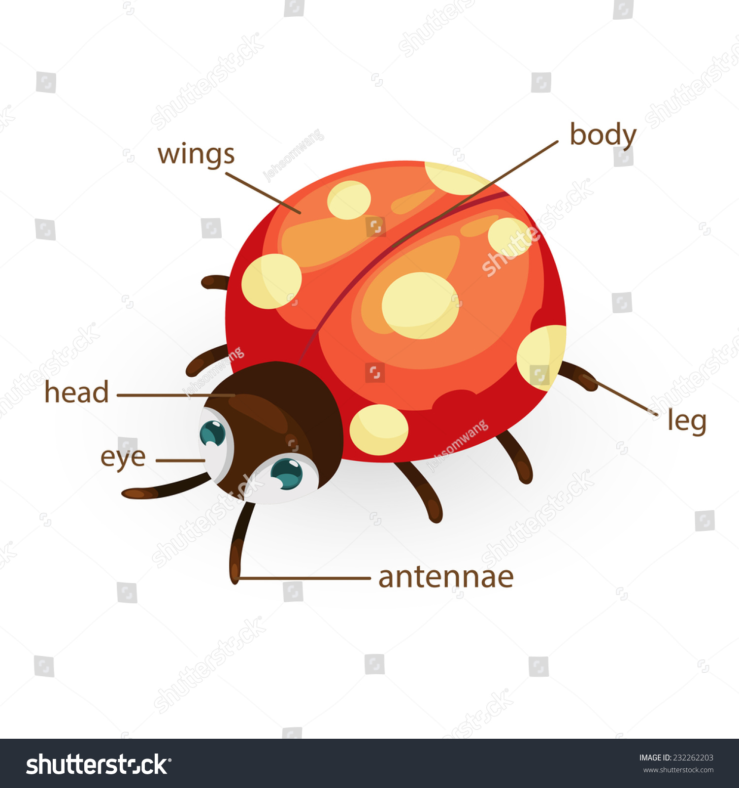 Illustration ladybug vocabulary part body stock vector 232262203 illustration of ladybug vocabulary part of body pooptronica Gallery