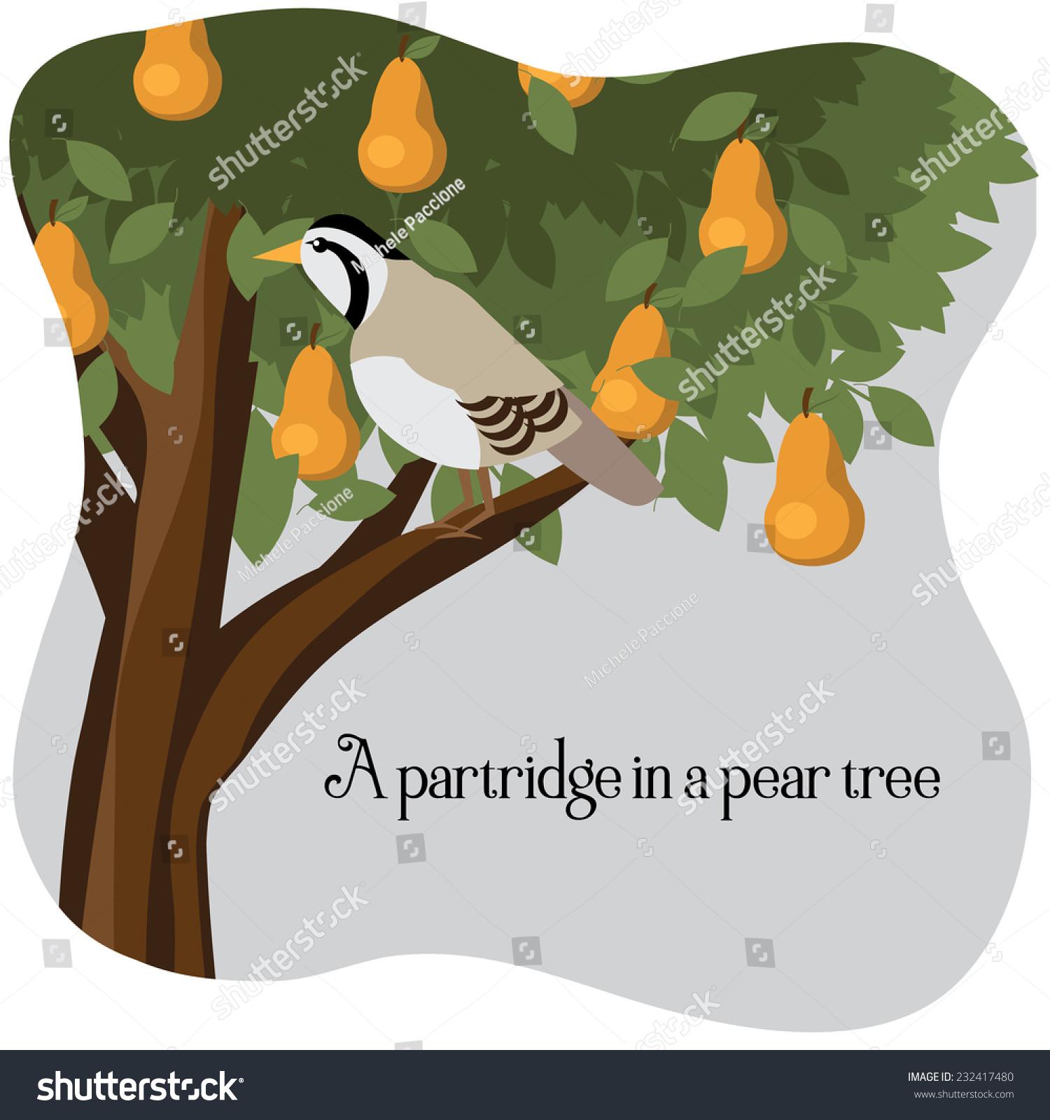Partridge Pear Tree Stock Illustration 232417480 - Shutterstock