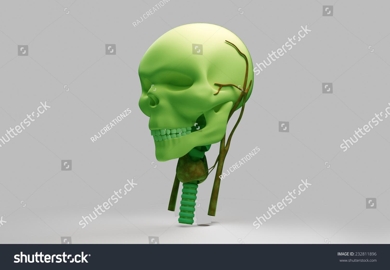 3 D Rendered Skull Neck Anatomy Stock Illustration 232811896