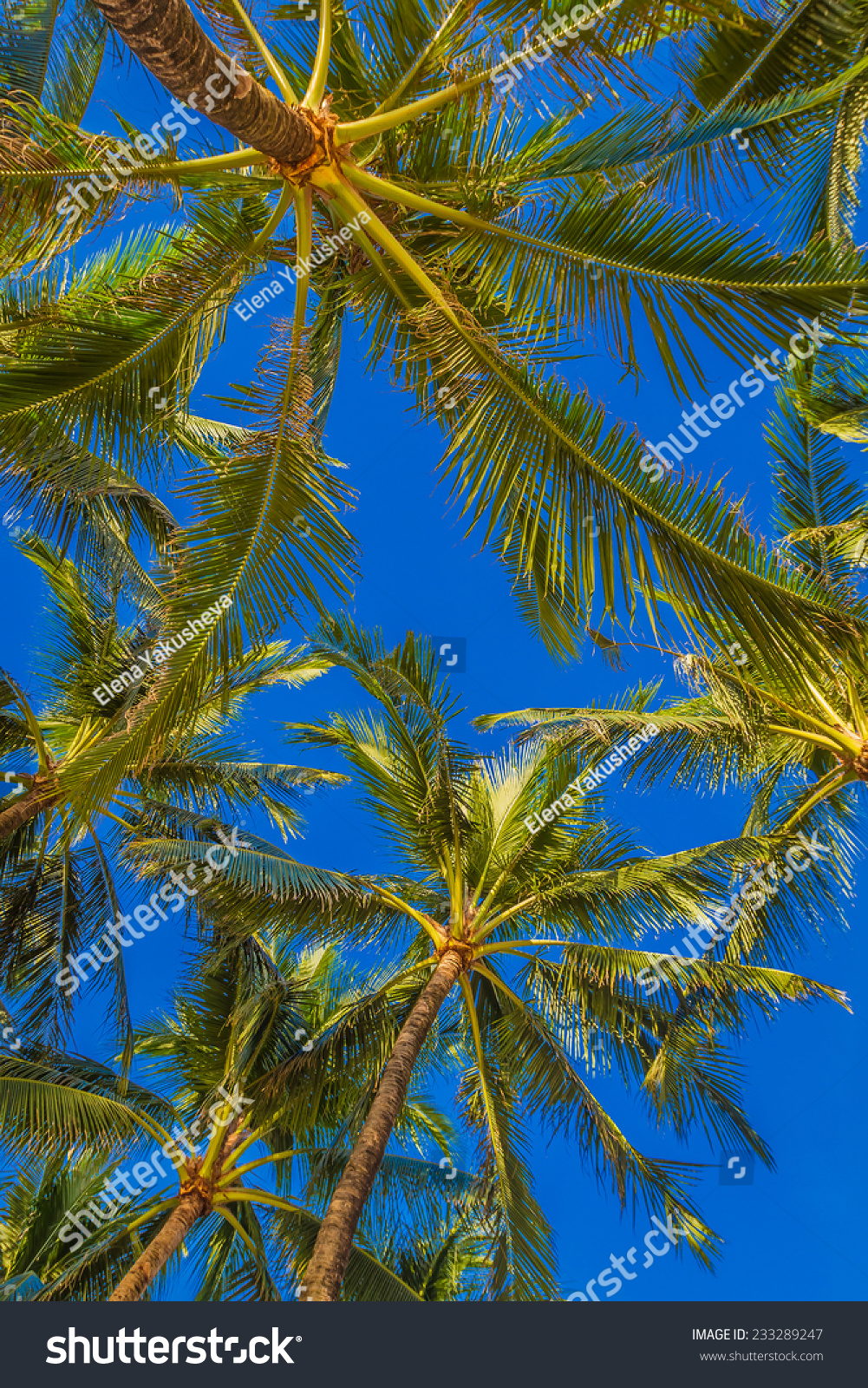 Palm Tree On Sky Background Stock Photo 233289247 ...