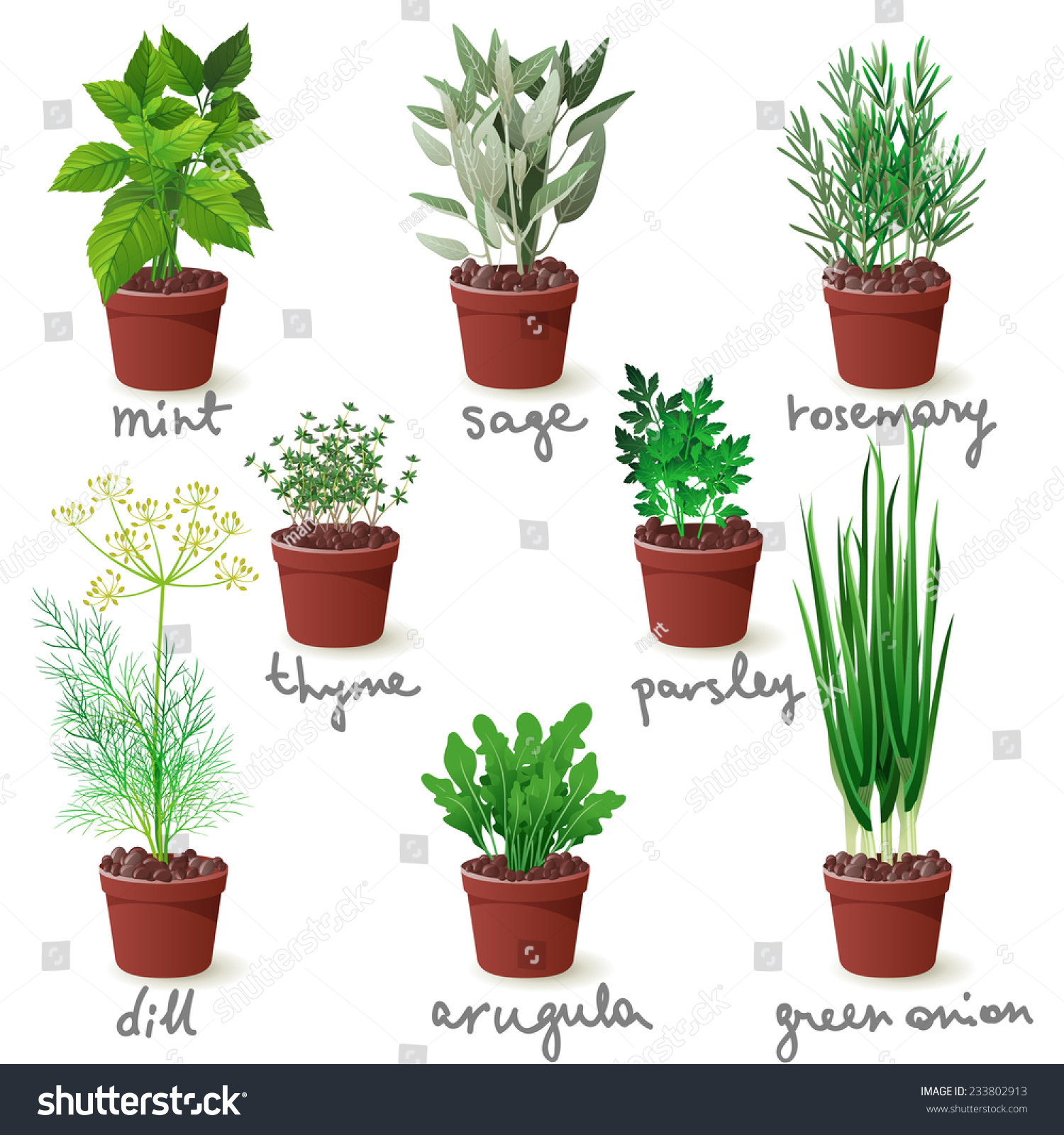 Different herbs royalty free stock image image 16265346 - Different Herbs Royalty Free Stock Photos Image 11487658 Wallpaper Image Gallery Different Herbs Wallpaper Gallery Image Gallery Different Herbs