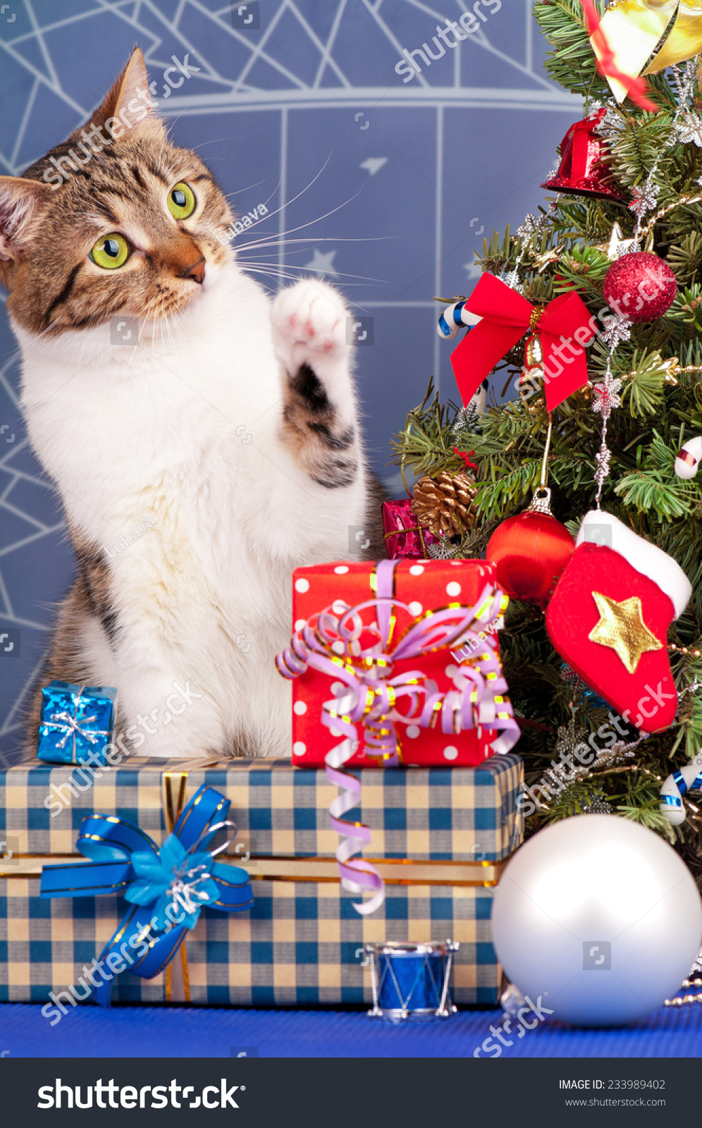 Toys For Christmas For Adults : Adult tabby near christmas spruce gifts stock photo