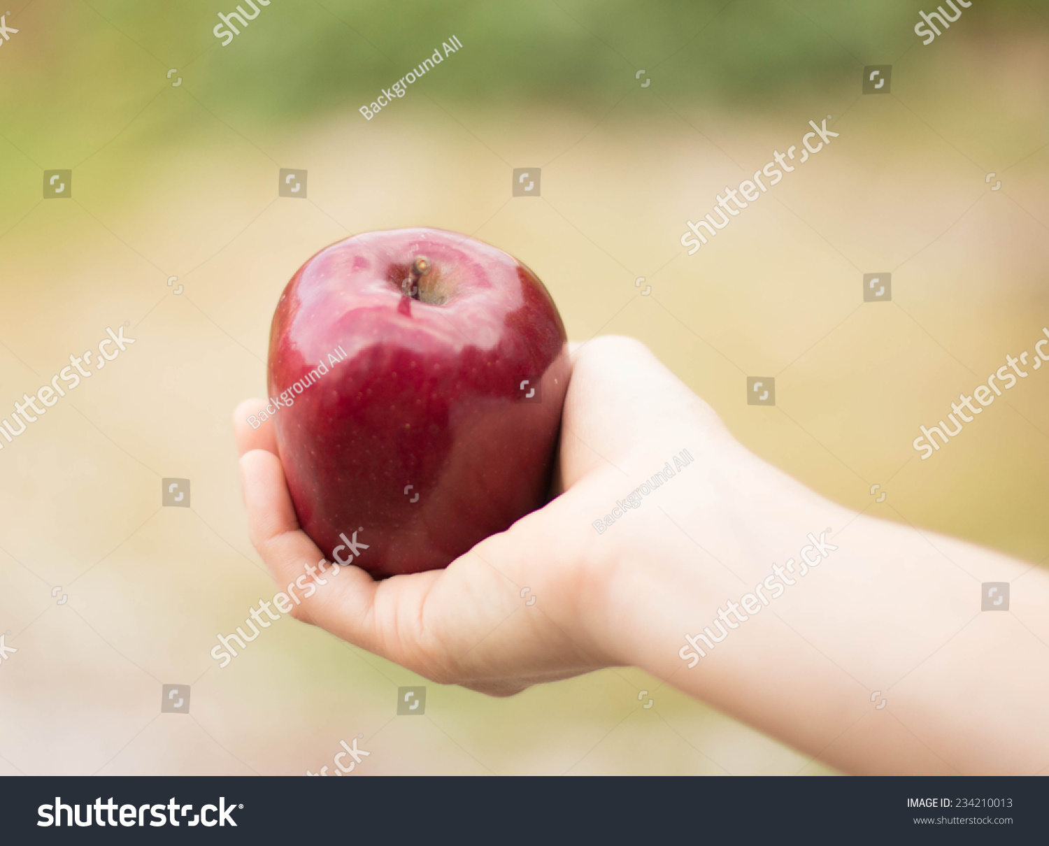 Hands holding red apple symbol love stock photo 234210013 hands holding red apple symbol of love over white vapory dress and green garden biocorpaavc