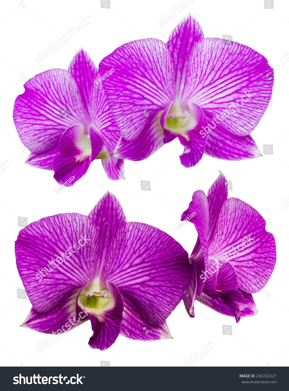 Isolates purple orchids two views of four different beautiful id 234332227 izmirmasajfo