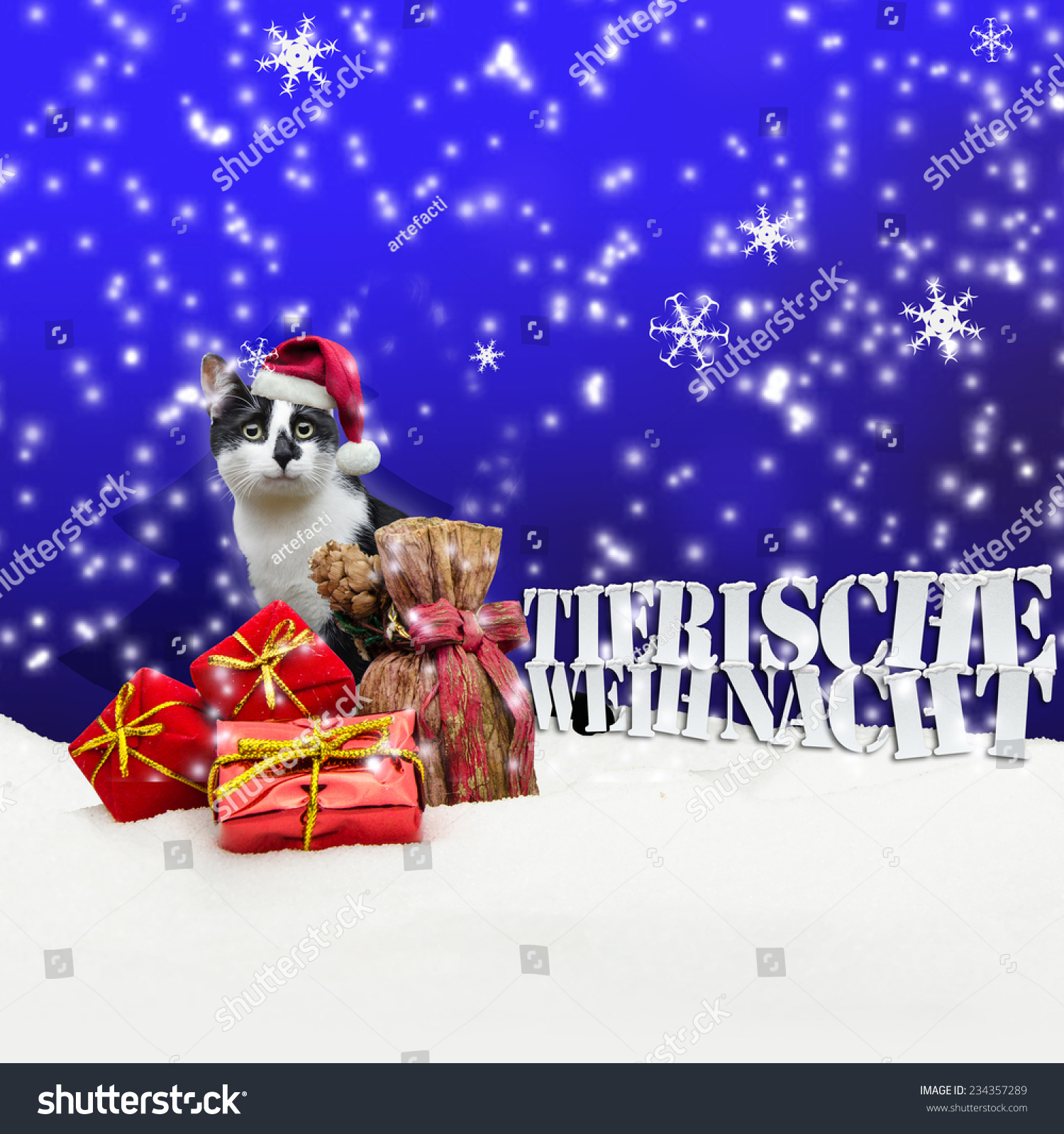 tierische weihnacht cat christmas snow pet stock photo. Black Bedroom Furniture Sets. Home Design Ideas