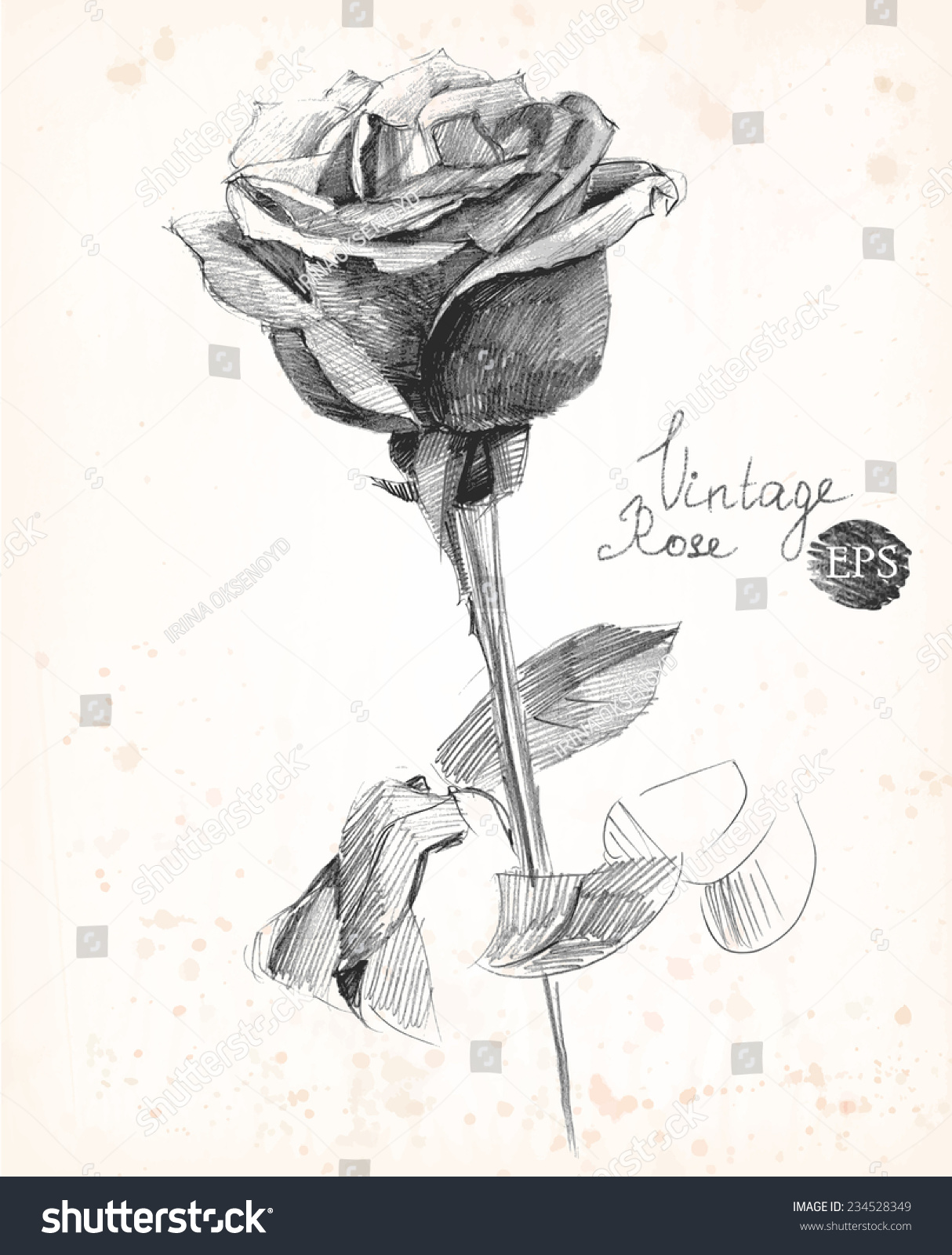 Hand drawn pencil sketch of a rose vintage style vector illustration