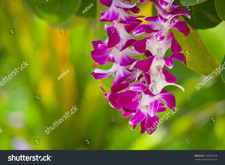 Hawaiian lei made large beautiful orchid stock photo 234646168 hawaiian lei made of large beautiful orchid blooms izmirmasajfo Images