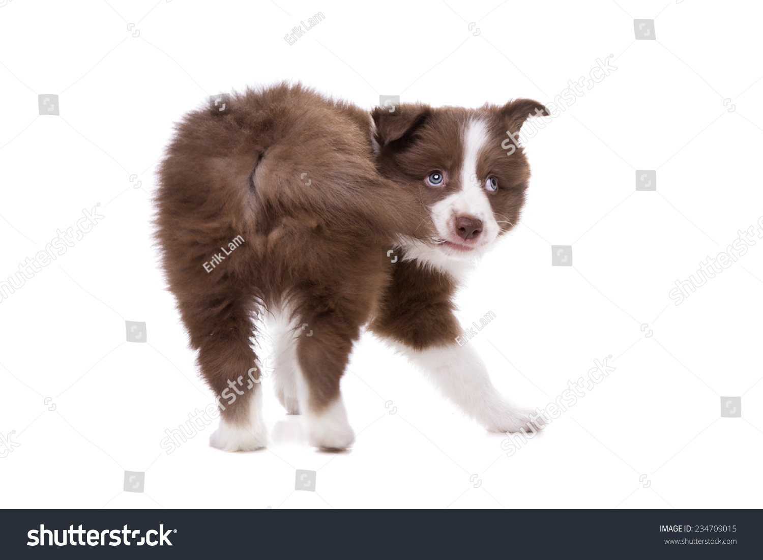 how to stop dog from biting tail