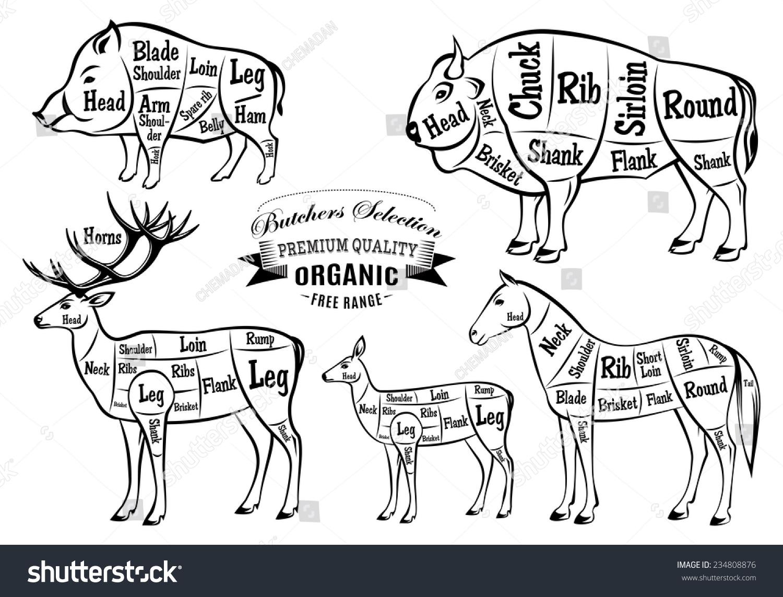 diagram cut carcasses boar bison deer stock illustration. Black Bedroom Furniture Sets. Home Design Ideas