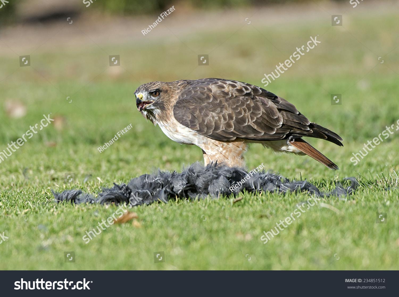 hawk kill and pike