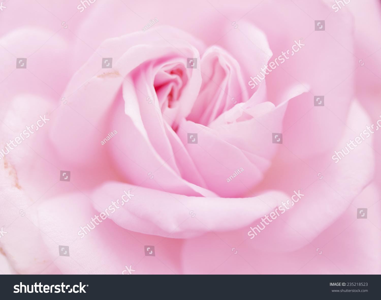 Soft Blur Light Pink Rose Flower Background Ez Canvas