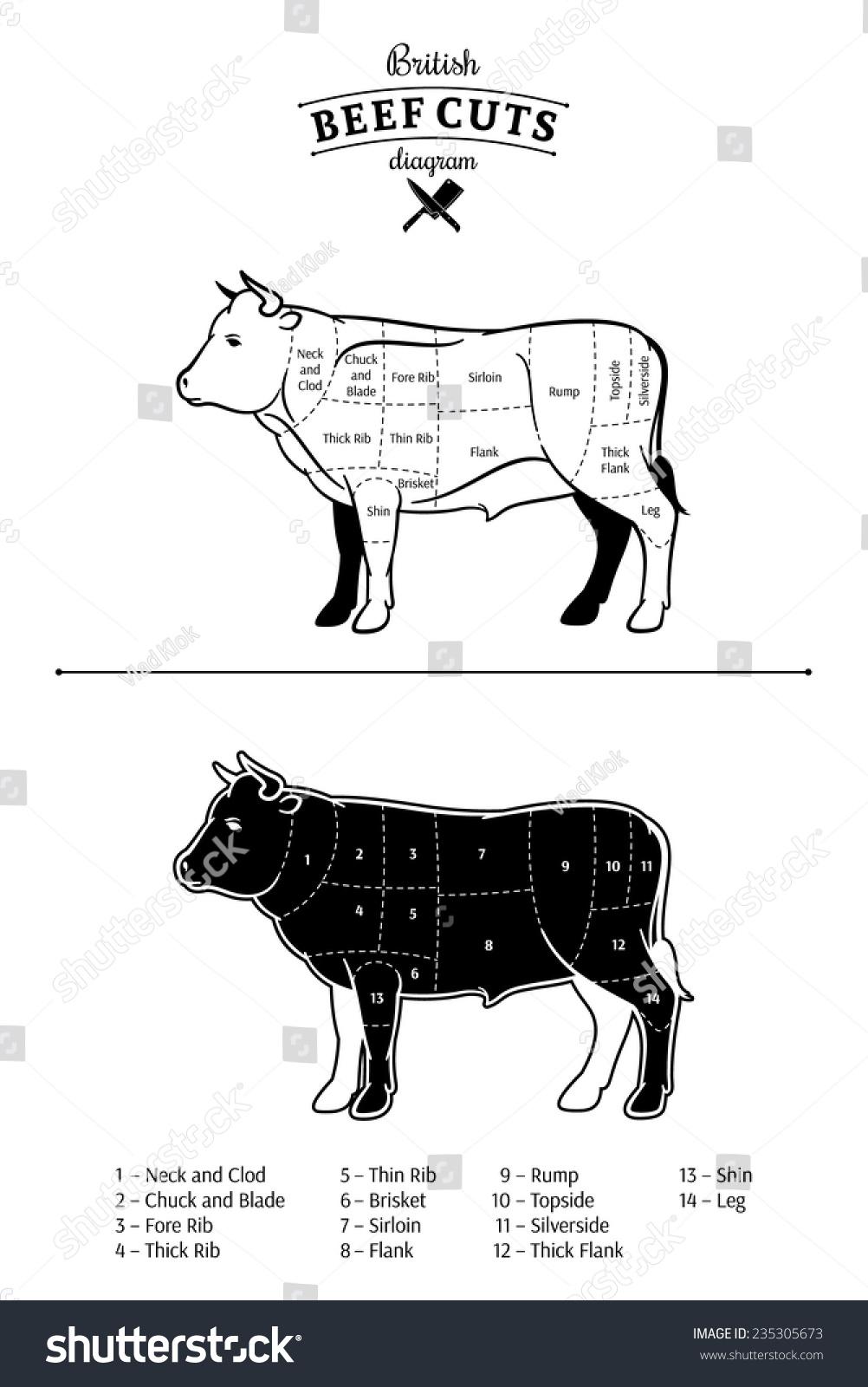 British beef cuts diagram stock vector 235305673 shutterstock british beef cuts diagram pooptronica