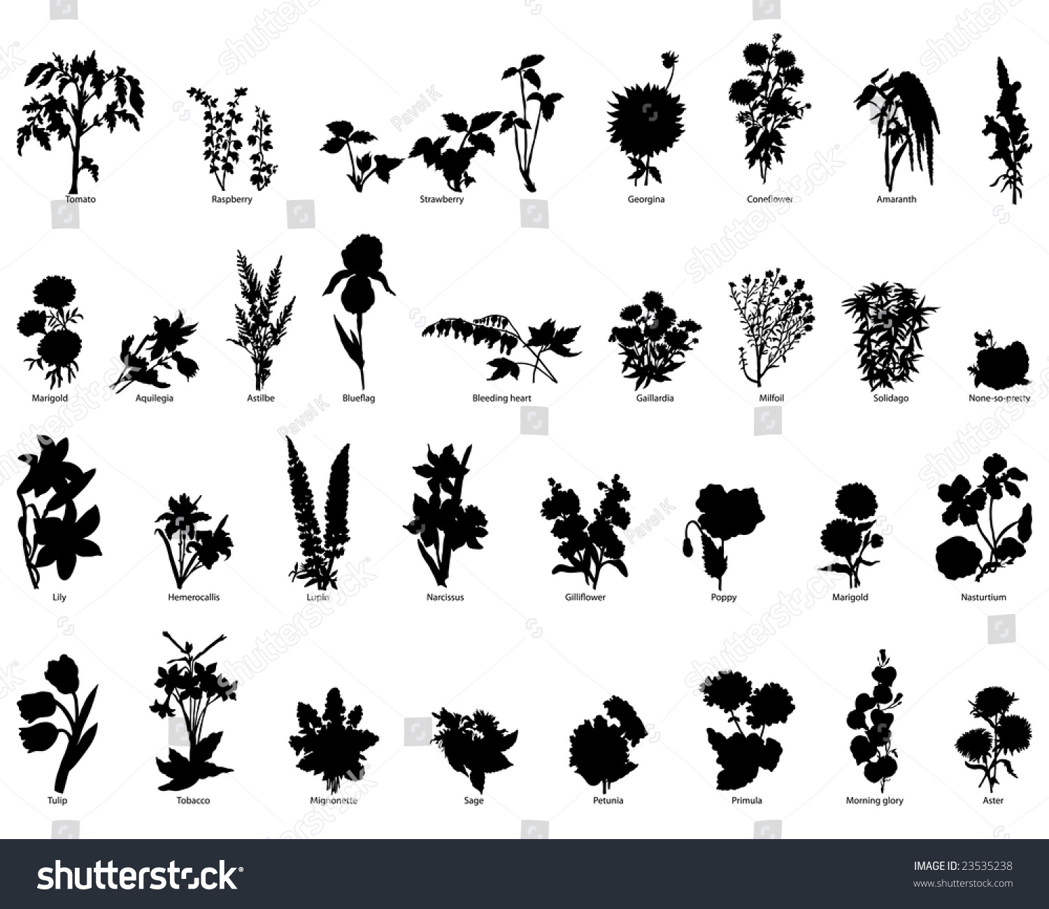 Big set different kind garden plants stock vector 23535238 for Different garden plants