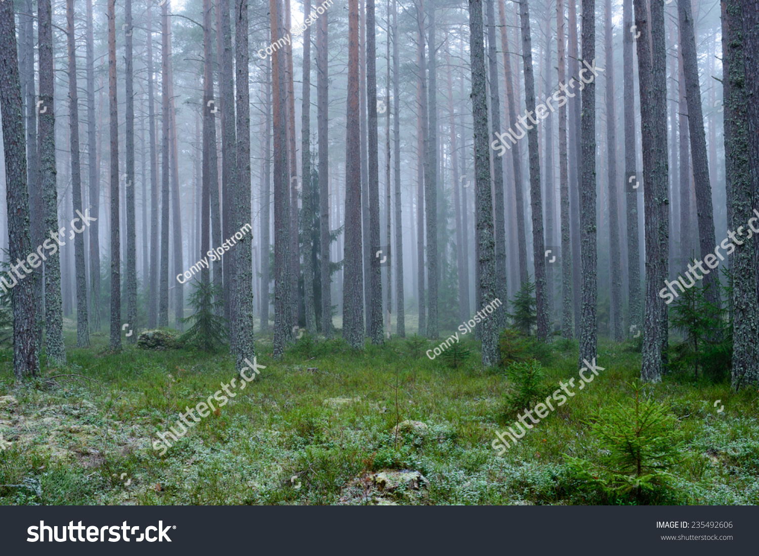mysterious forest in winter - photo #4