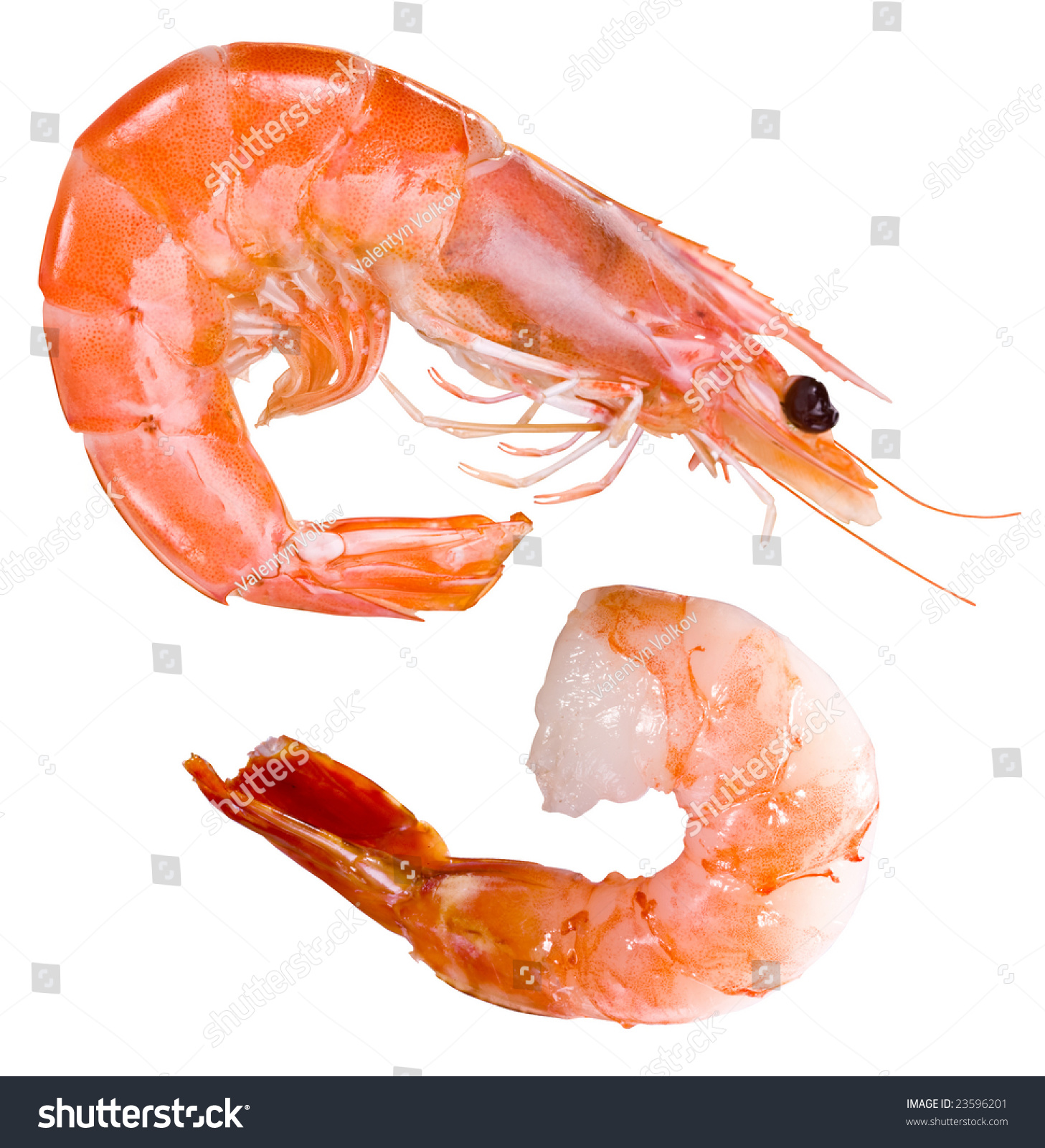 Shrimp Stock Photo 23596201 - Shutterstock