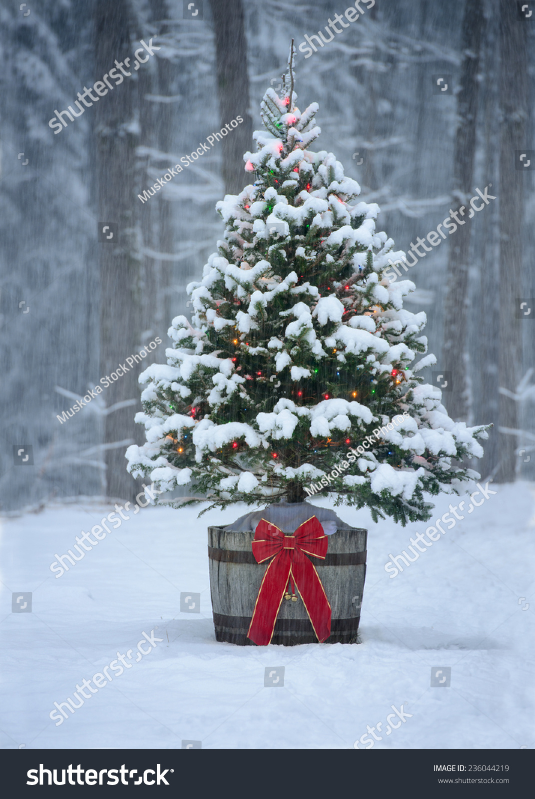 snow covered natural spruce christmas tree stock photo. Black Bedroom Furniture Sets. Home Design Ideas
