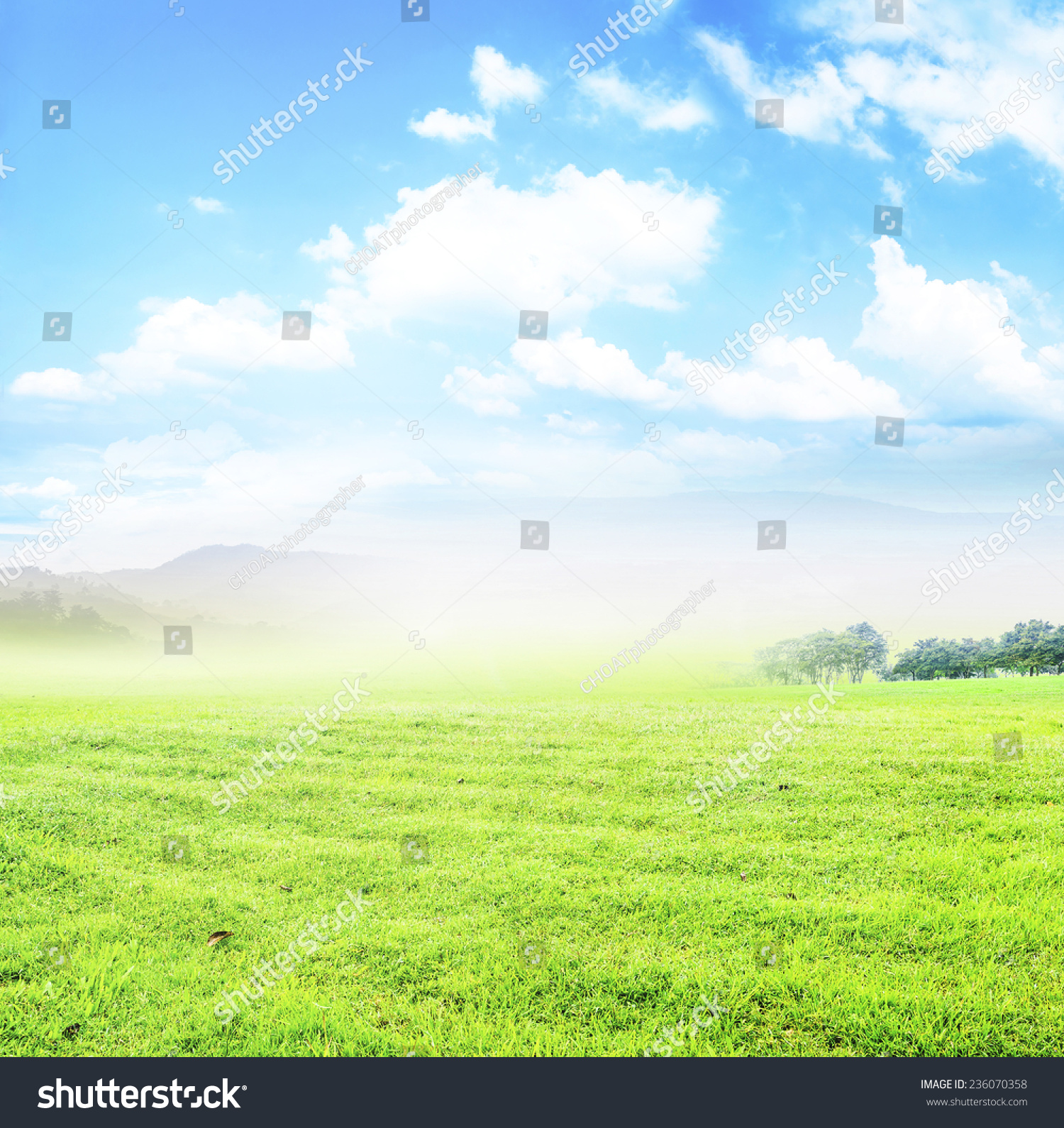 Abstract Natural Backgrounds Green Grass Beauty Stock ...