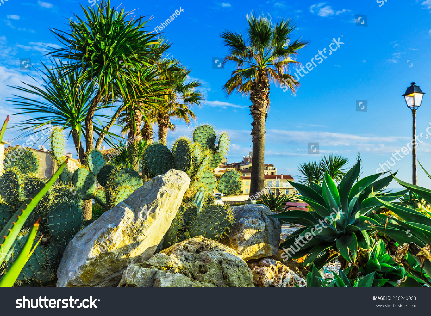 Composition Plants City Antibes South France Stock Photo (Royalty ...