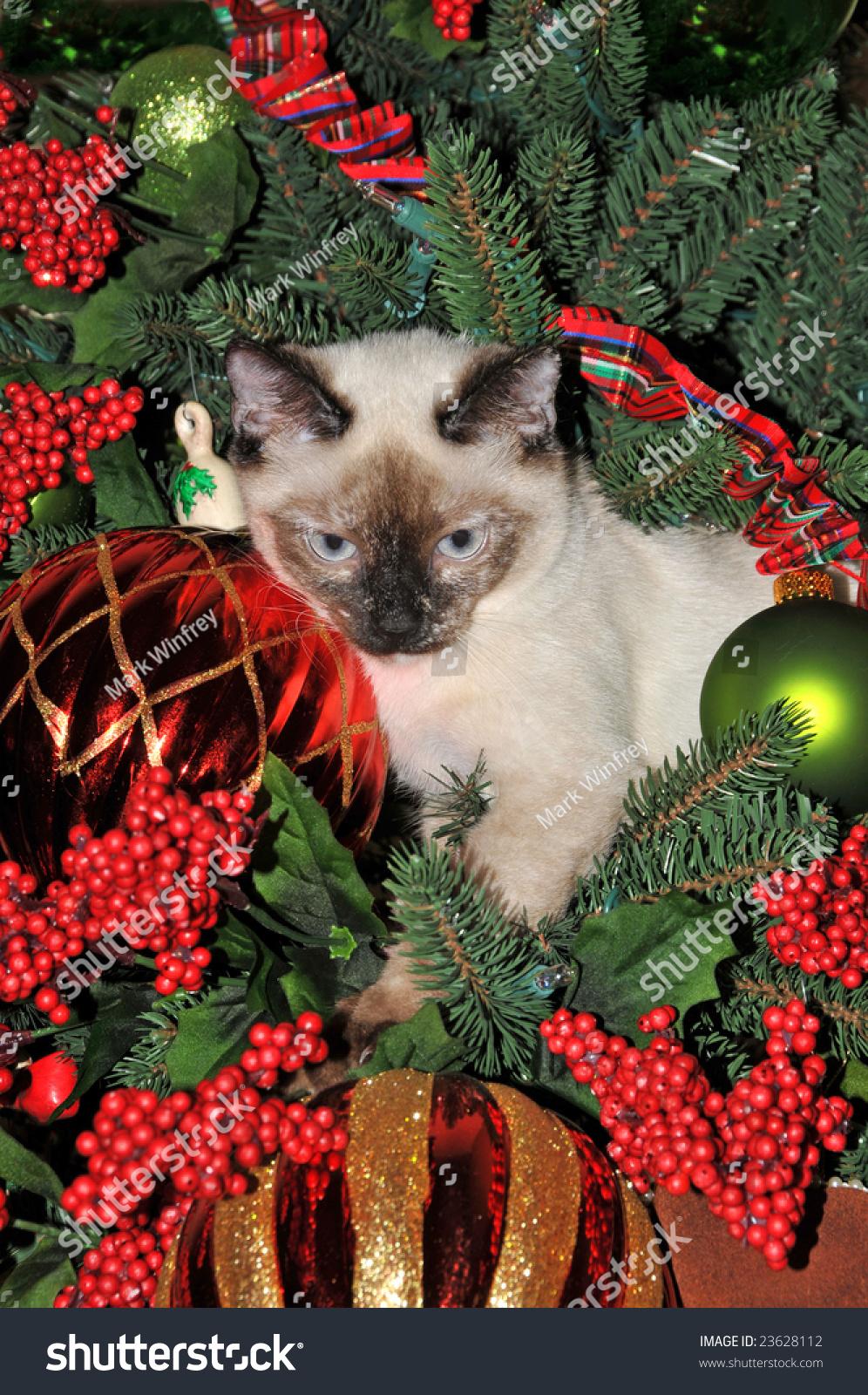 stock-photo-cat-in-christmas-tree-236281