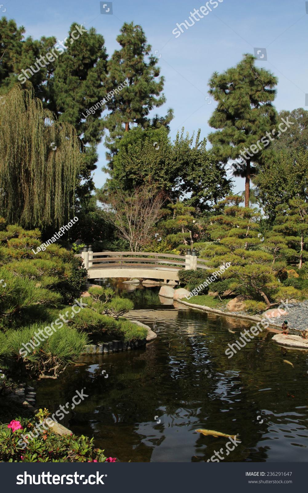 Koi Pond Earl Burns Miller Japanese Stock Photo (Royalty Free ...