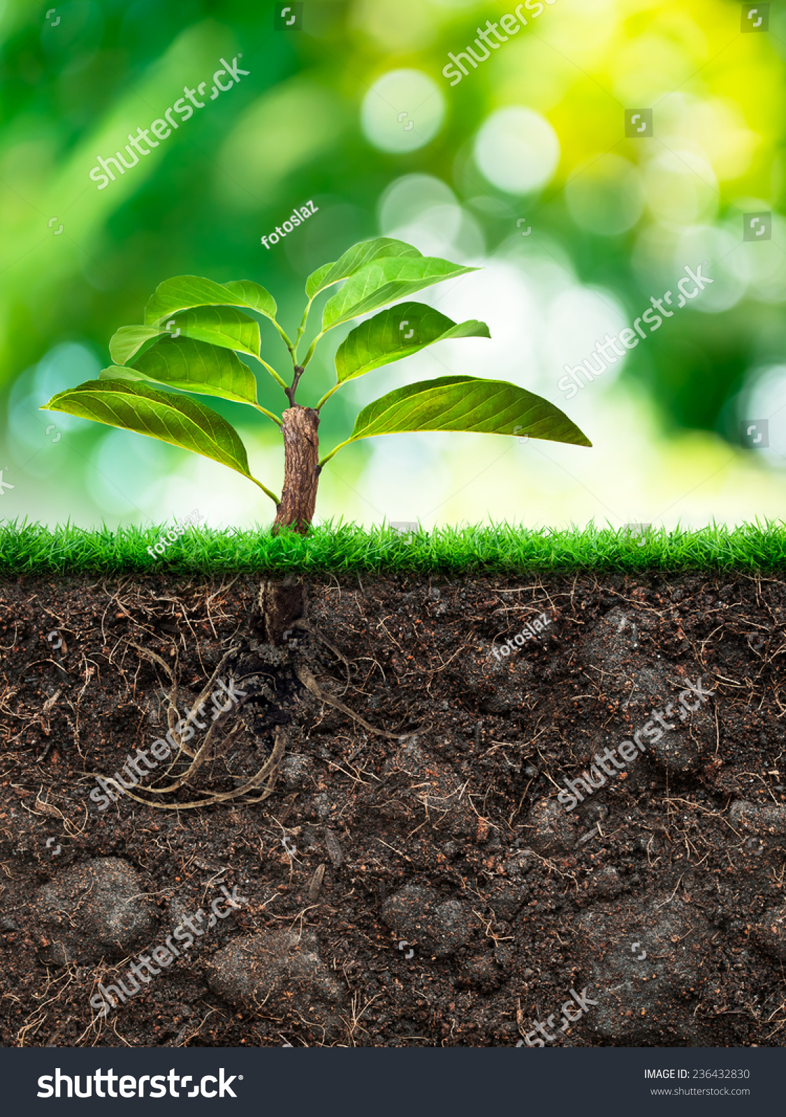 Origin tree soil grass green blur stock photo 236432830 for Origin of soil