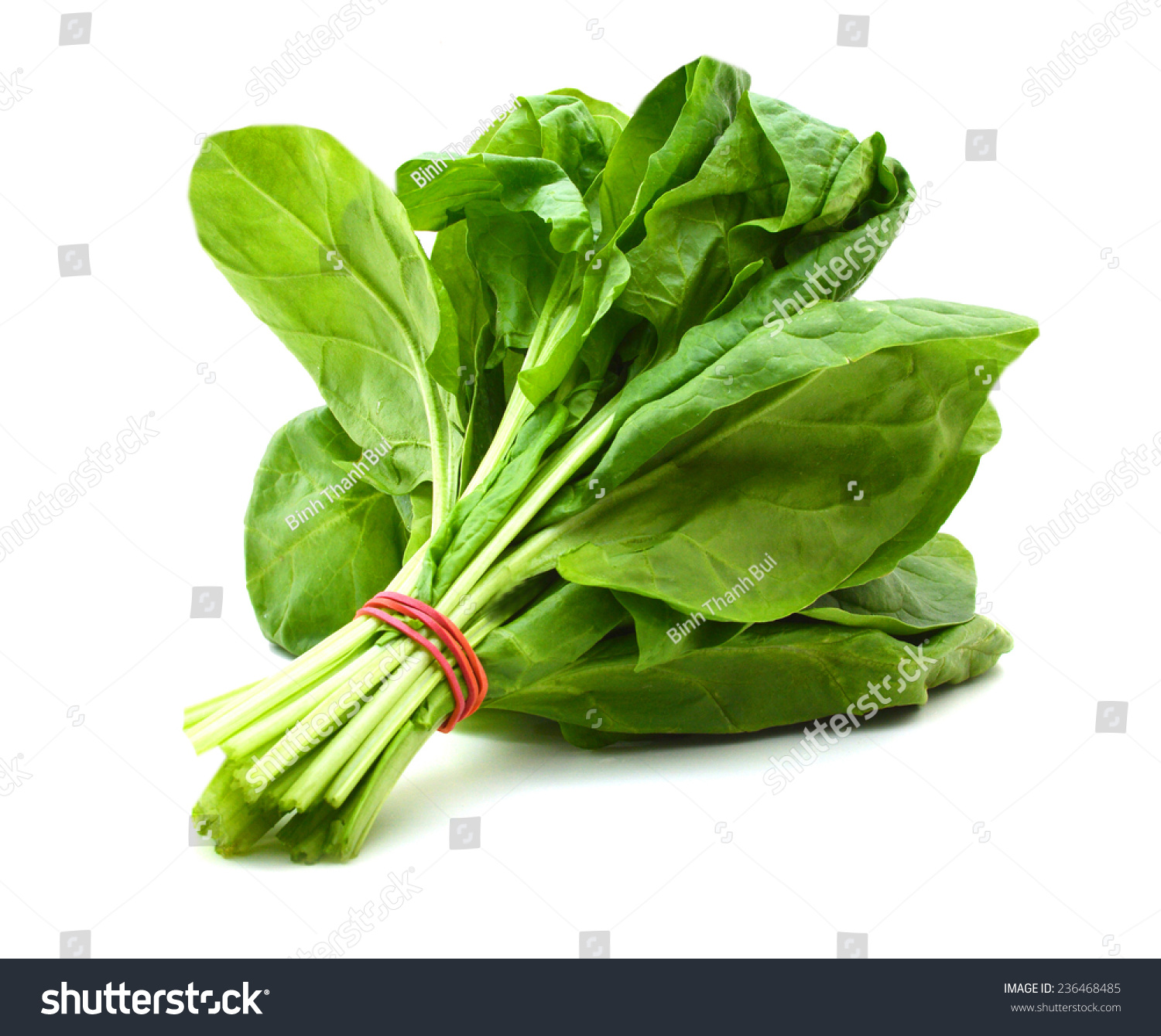 Bunch Of Spinach Leaves On Isolated White Background Stock ...