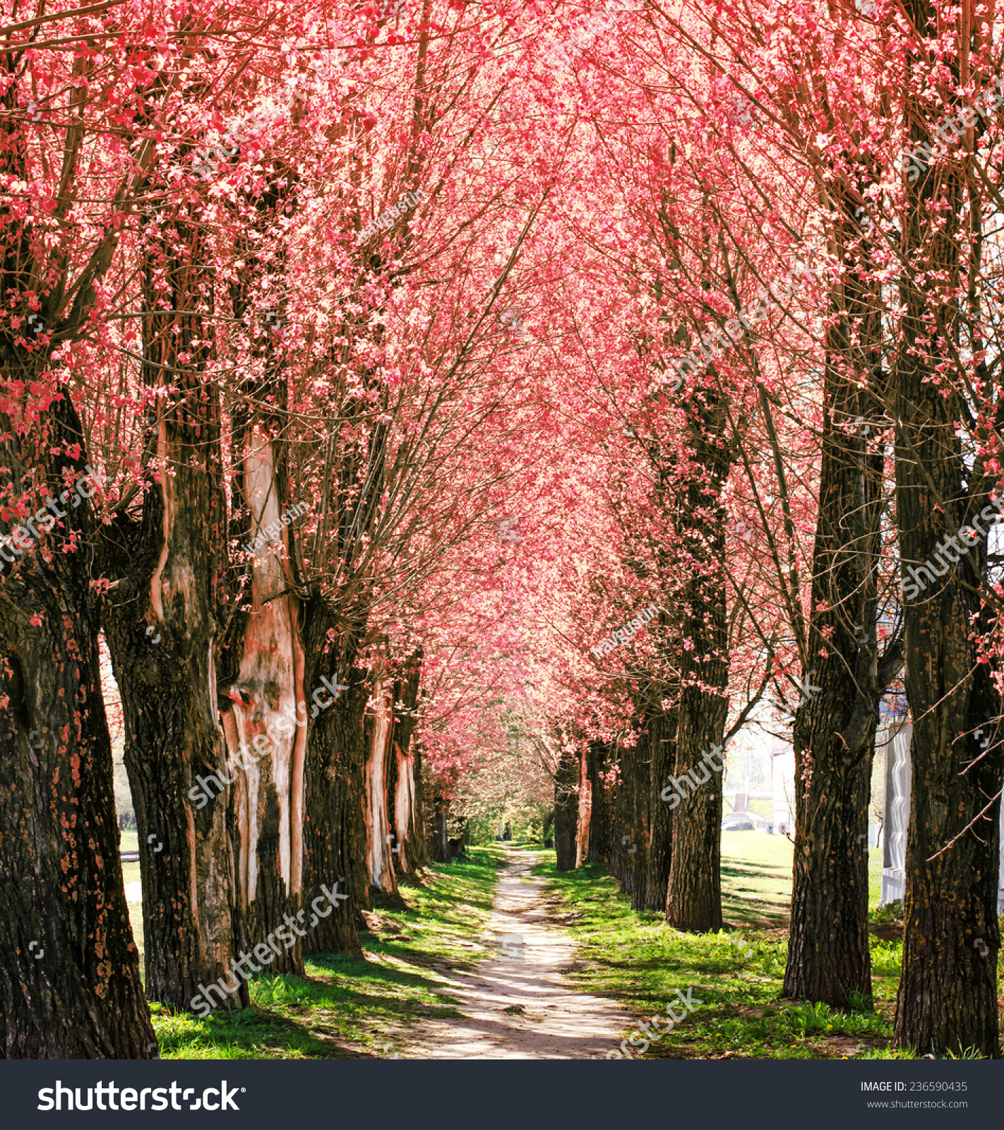 spring nature background blossom park alley stock photo 236590435