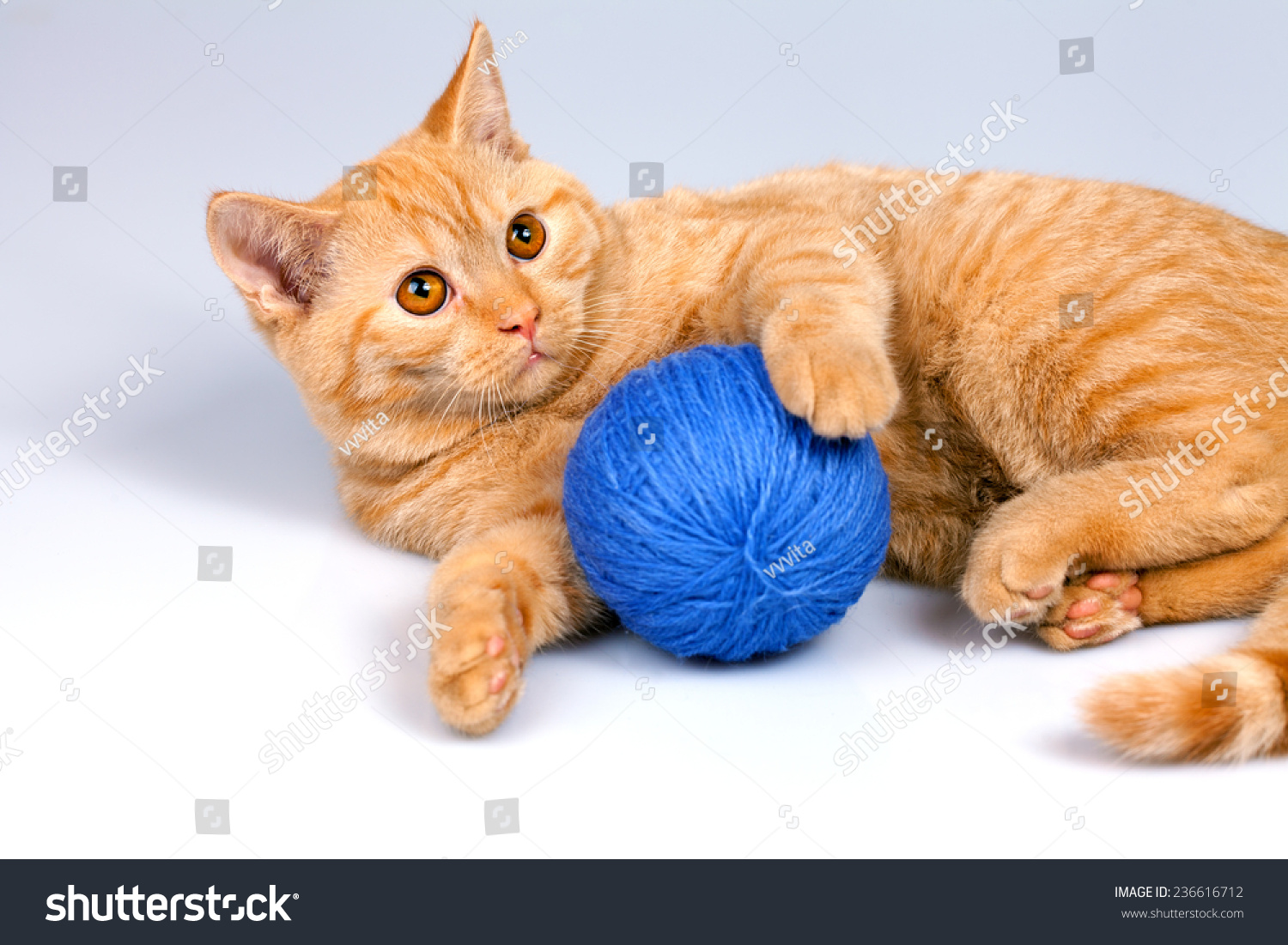 Cute Kitten Playing Clew Yarn Stock Photo 236616712 ...