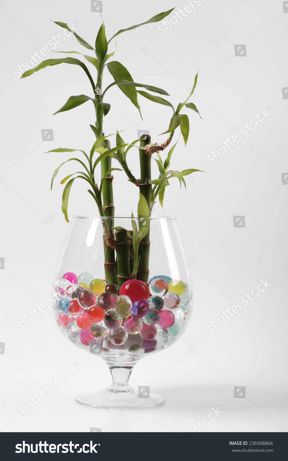 Beautiful flowers vases hydrogel stock photo edit now 236908864 beautiful flowers in vases with hydrogel izmirmasajfo
