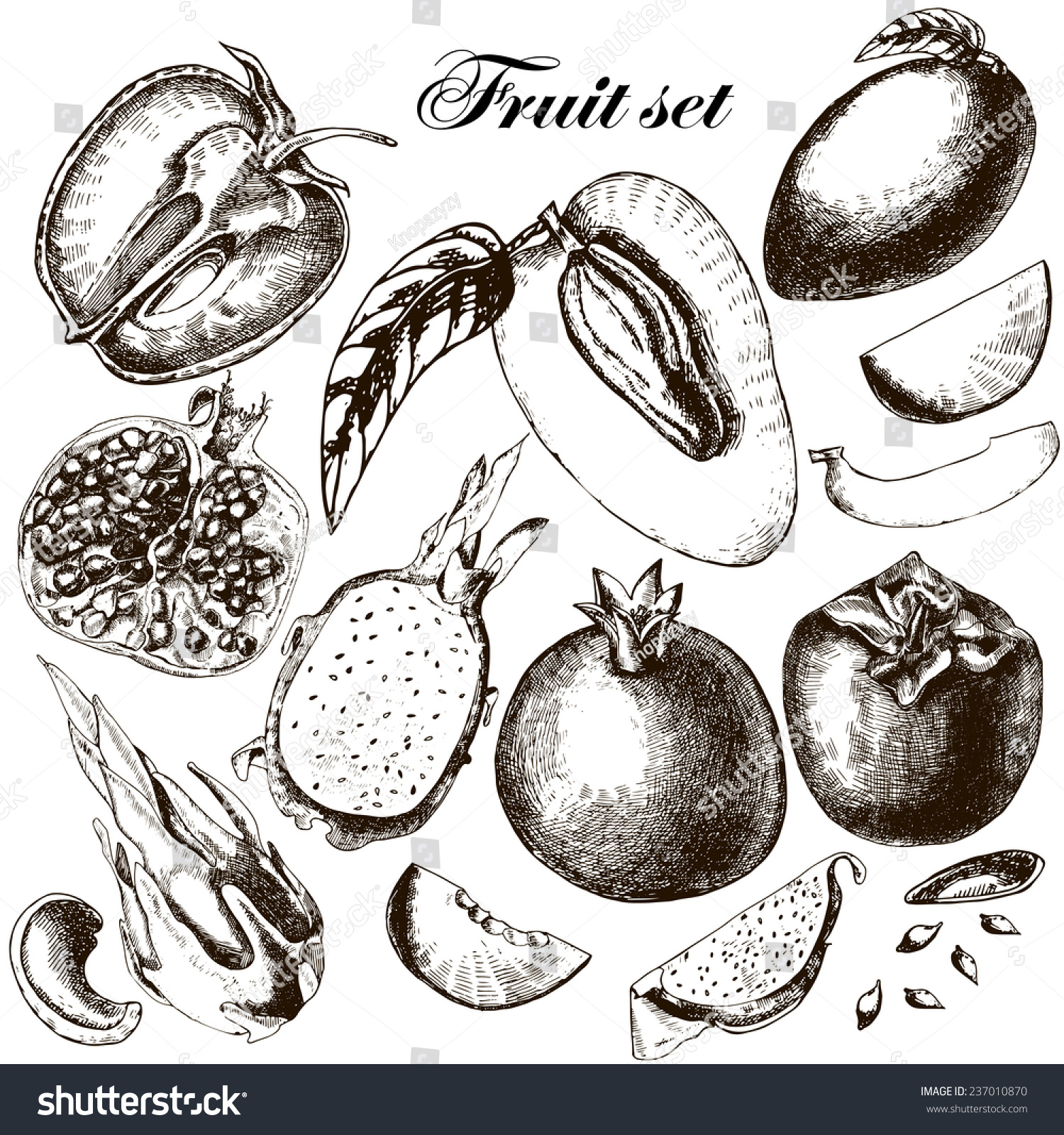 set fruits freehand drawing vector illustration stock vector