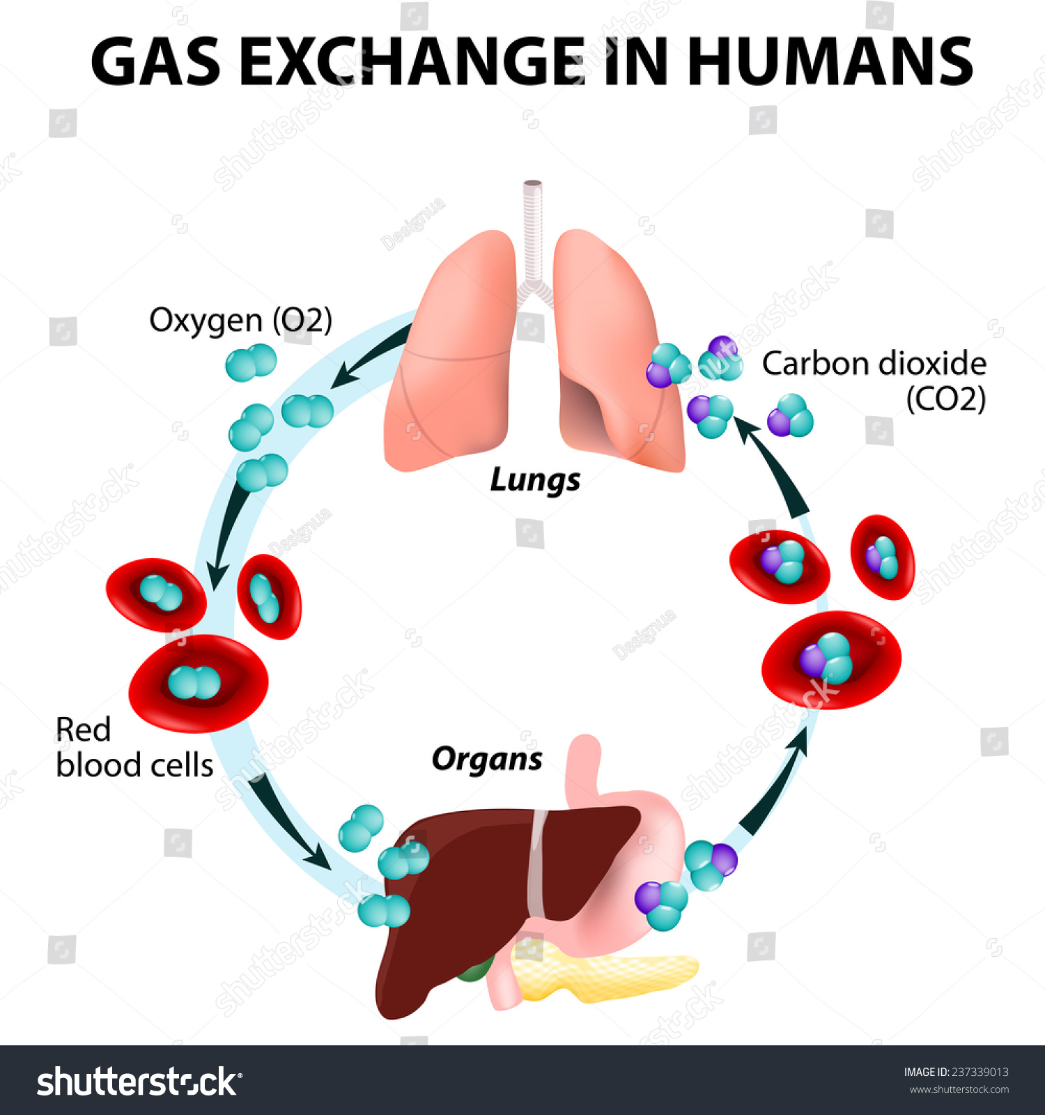 how to get gas out of your body