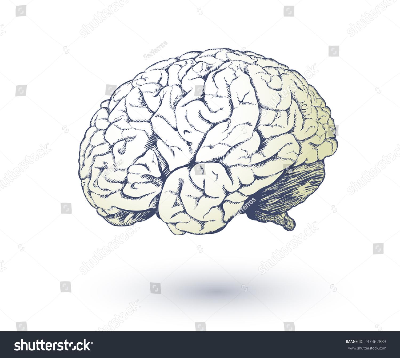 Vector Drawing Human Brain Medical Design Stock Vector Royalty Free
