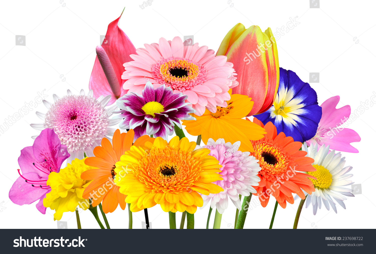 Flower Bouquet Collection Various Colorful Flowers Stock Photo ...