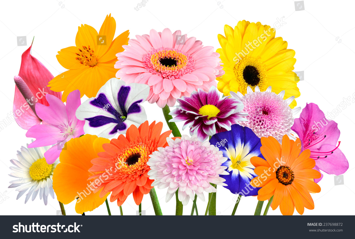 Flower bouquet collection of various colorful flowers and id 237698872 izmirmasajfo