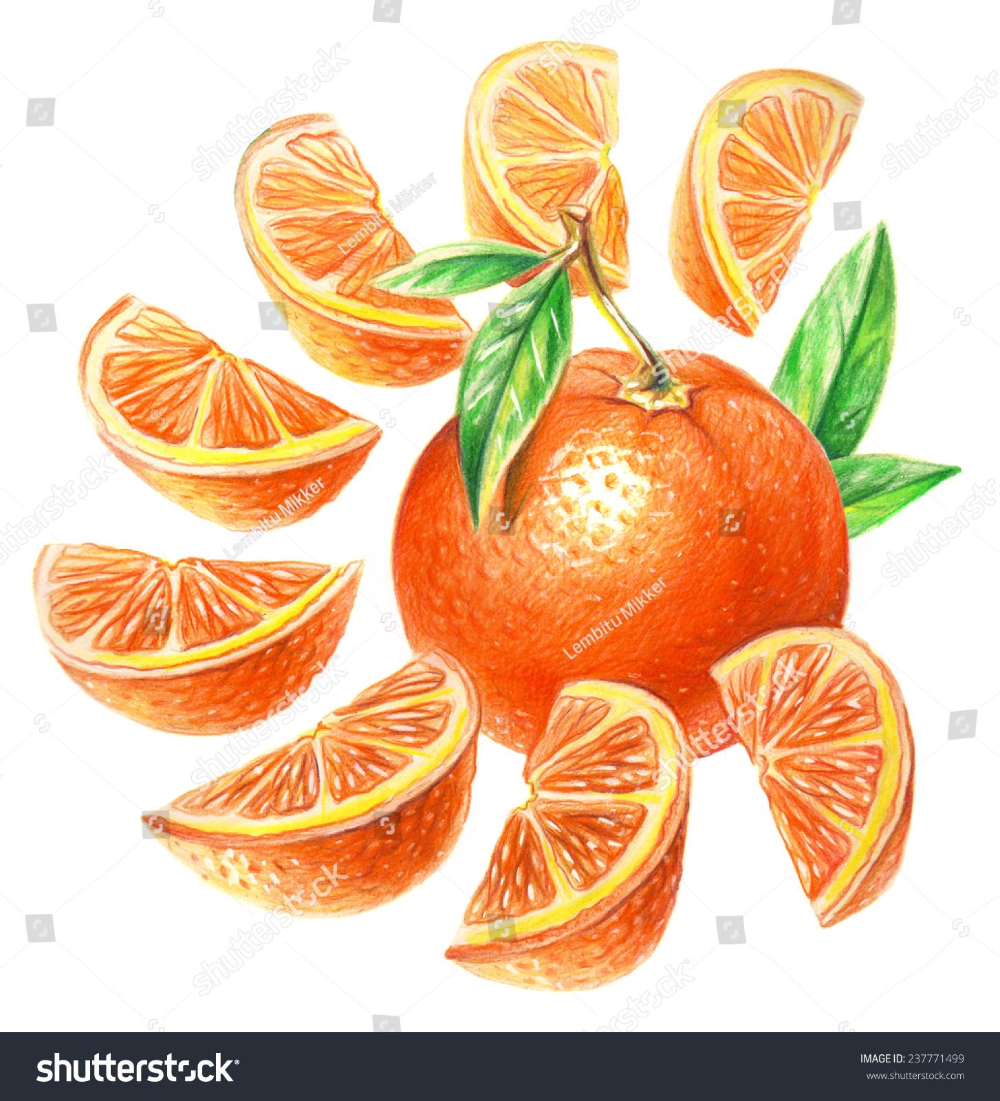 Pencil drawing orange slices stock illustration 237771499