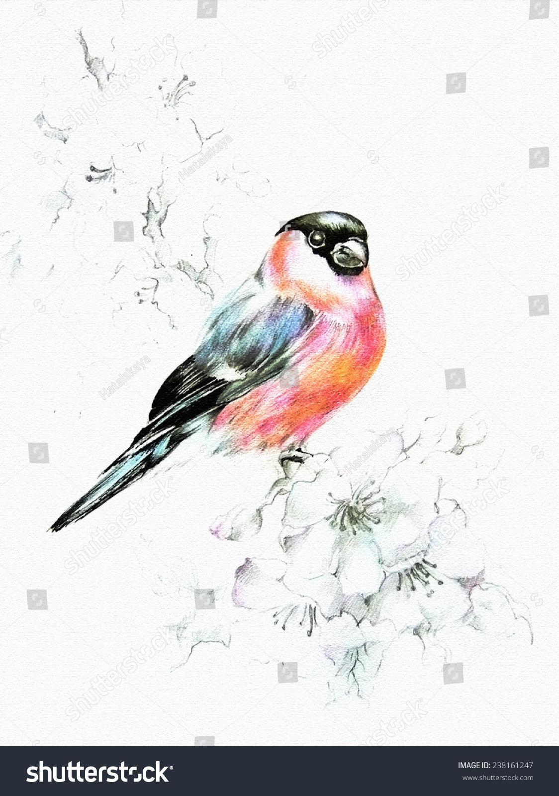 Where bullfinch fly in spring