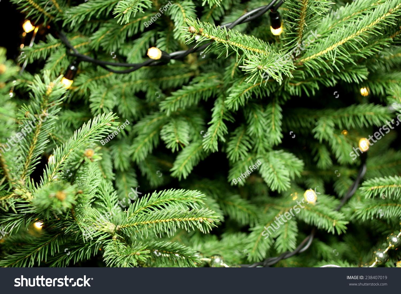 Christmas Lights Hanging Tree Christmas Tree Stock Photo