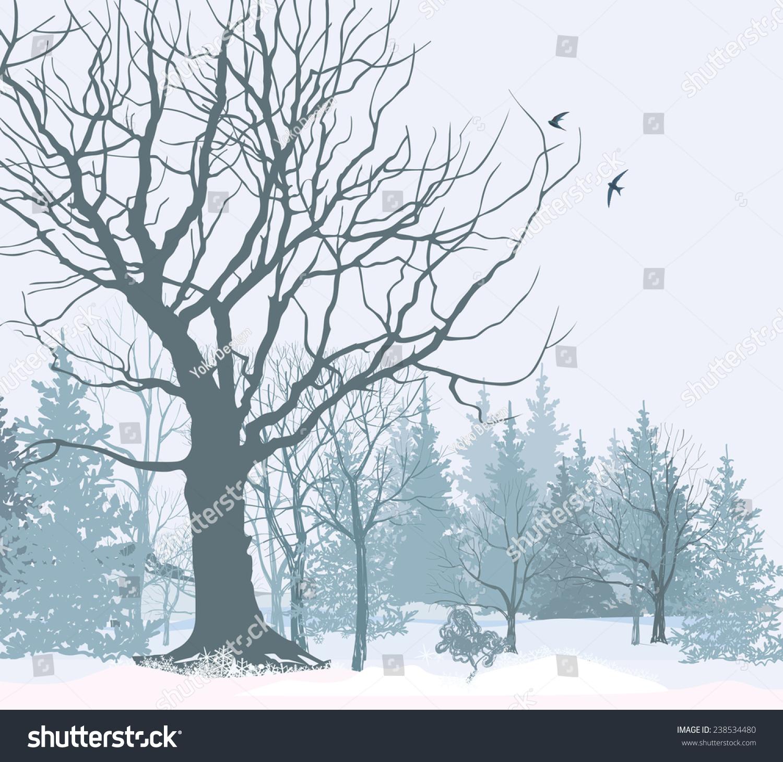 Winter Landscape Park Garden Snow Christmas 238534480