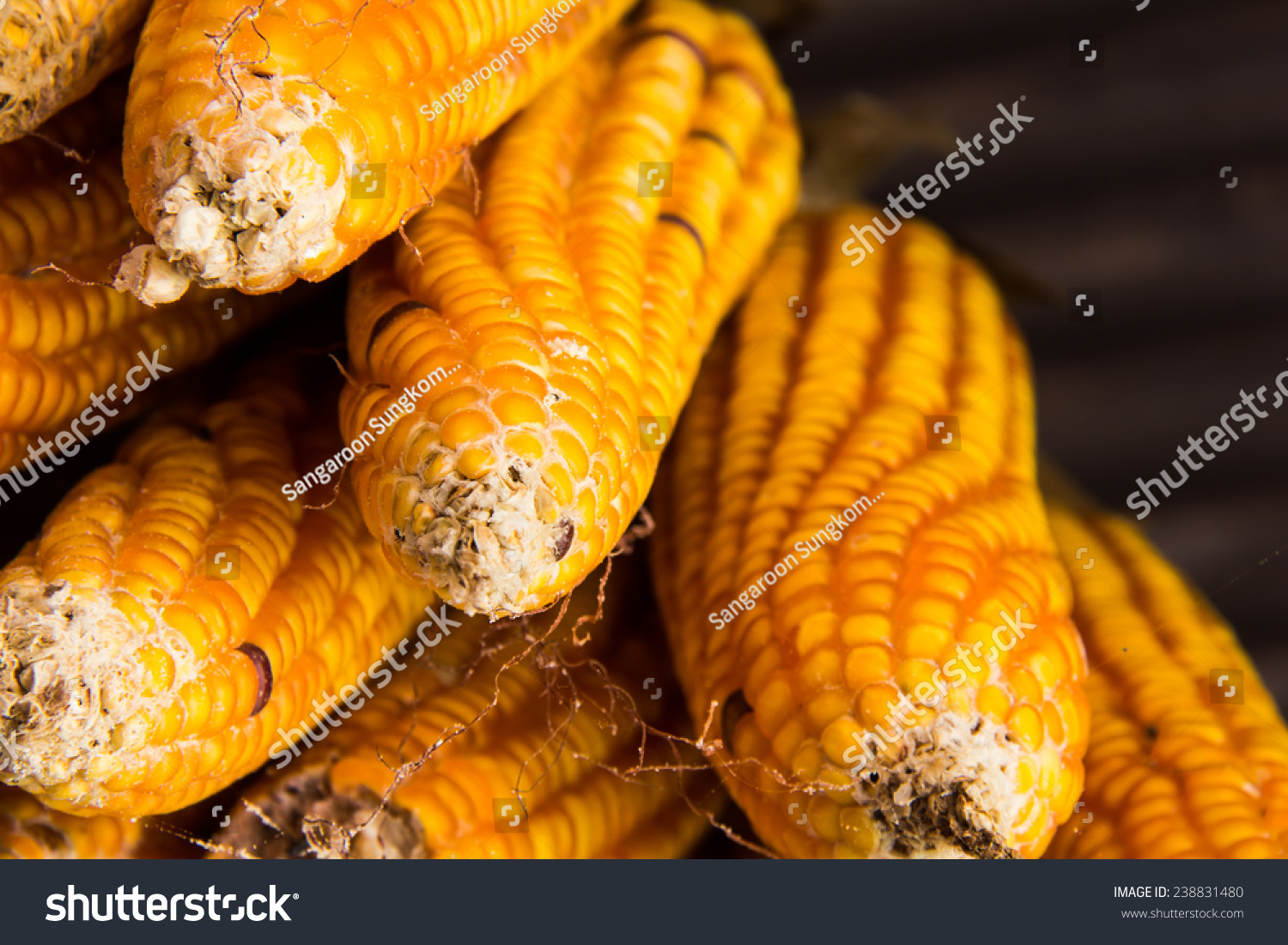 Dried Corn Animal Feed Cultivate Stock Photo (Edit Now
