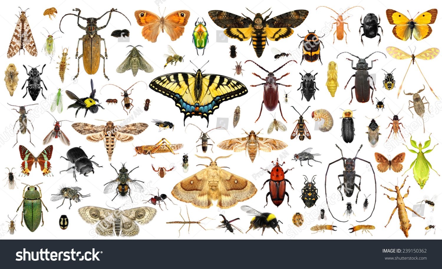 Set of insects on a white background #239150362