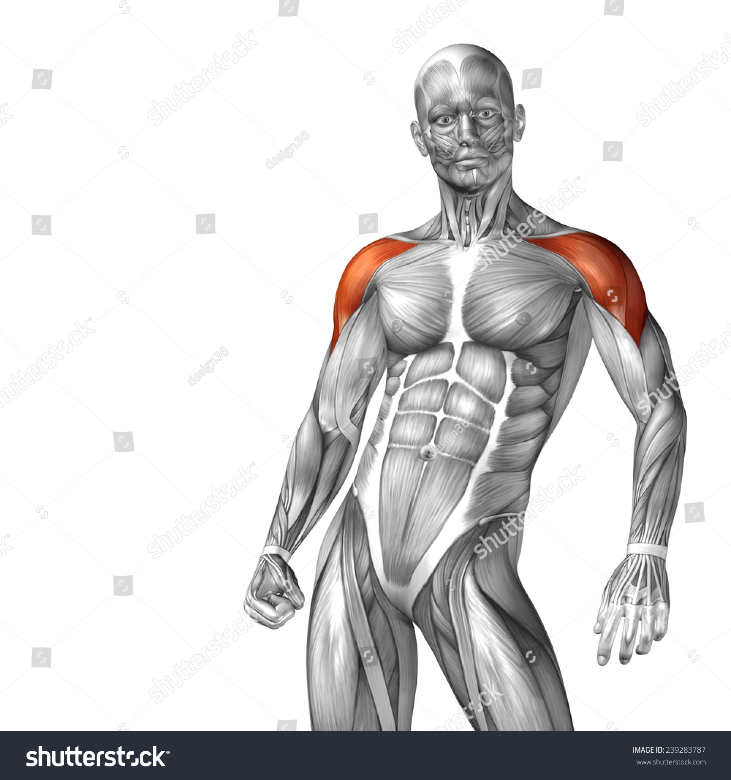 Concept Conceptual 3 D Chest Human Anatomy Stock Illustration