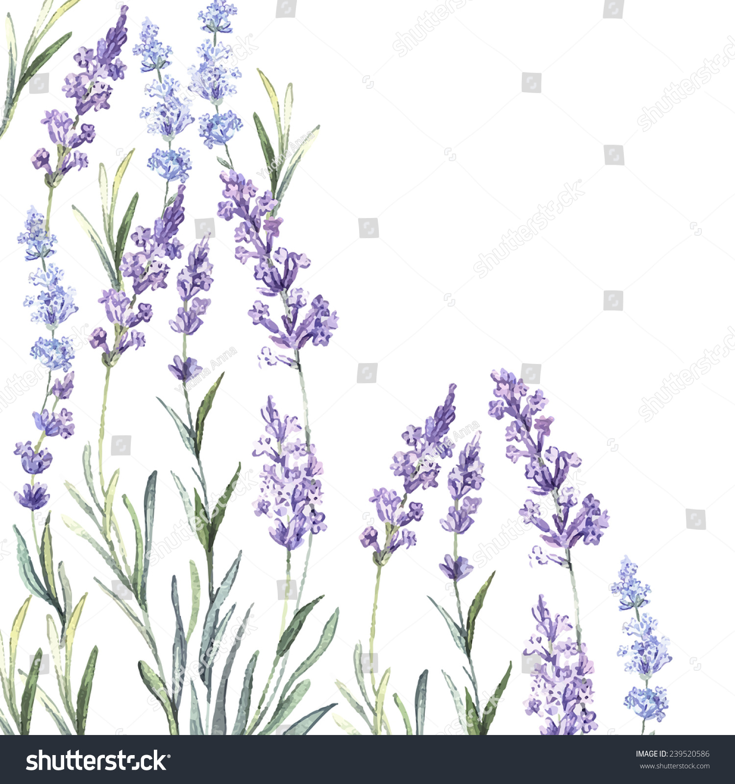 watercolor vintage background lavender watercolorvector