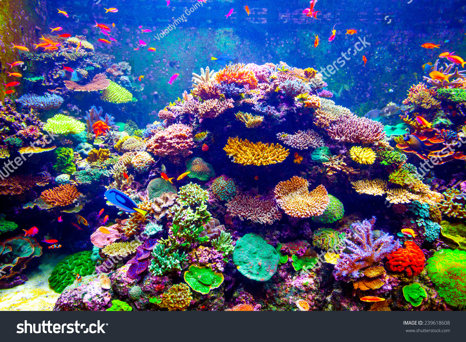 Coral reef tropical fish sunlight singapore stock photo for Tropical fish tank fish