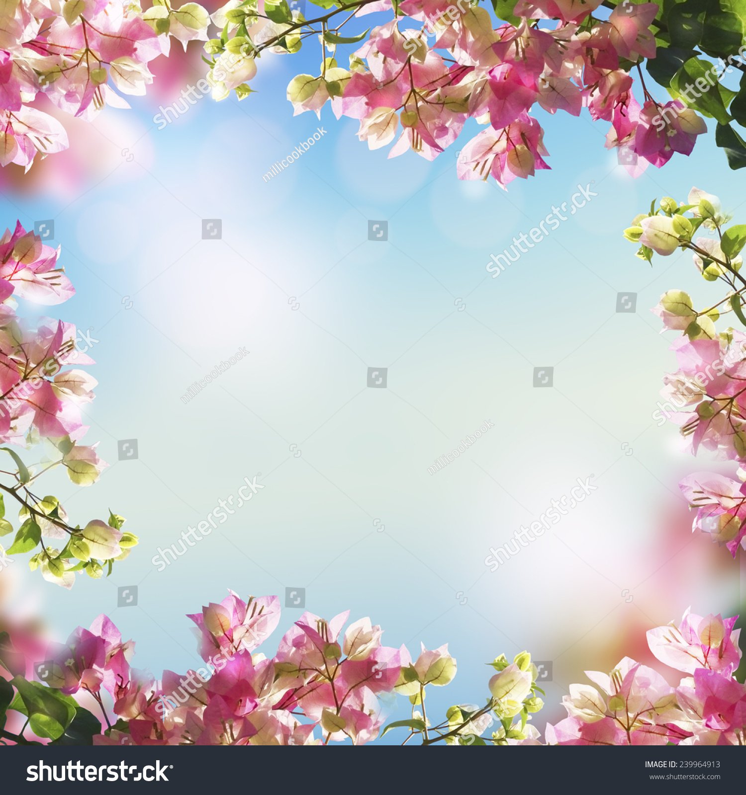 Blooming Flowers Spring Summer Bokeh Light Stock Photo Edit Now