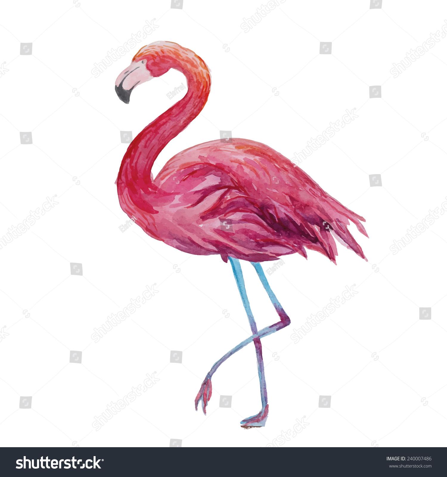 Flamingo Illustration Vintage Watercolor Vector Hand Drawn