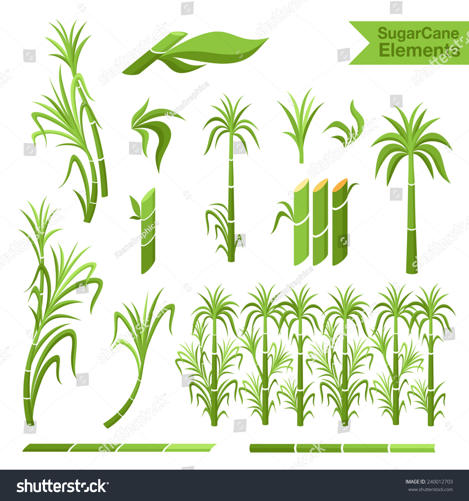 sugar cane decoration borders steams leaves stock vector 240012703 shutterstock. Black Bedroom Furniture Sets. Home Design Ideas